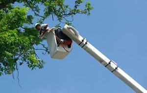Tree Pruning and Trimming Services Sydney