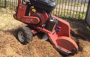 Stump Grinding and Stump Removal Sydney