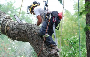 Tree Removal Services in Sydney
