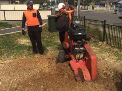 Stump Removal Services in Sydney