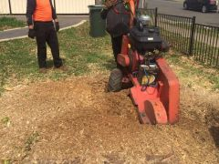 Stump Grinding by AAA Advanced Tree Lopping
